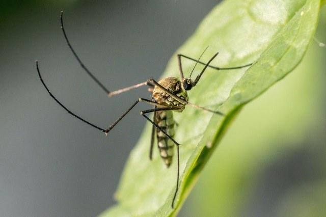 Come eliminare le zanzare in casa quest'estate