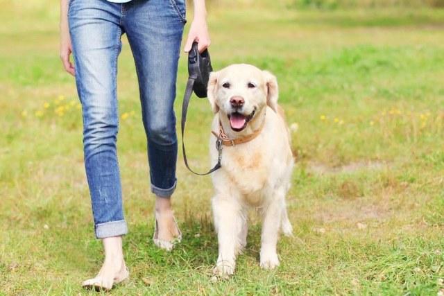 uscire-con-il-cane-quante-volte-al-giorno